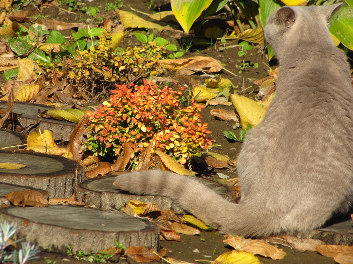 Kot, fot.Sylwia Łojek