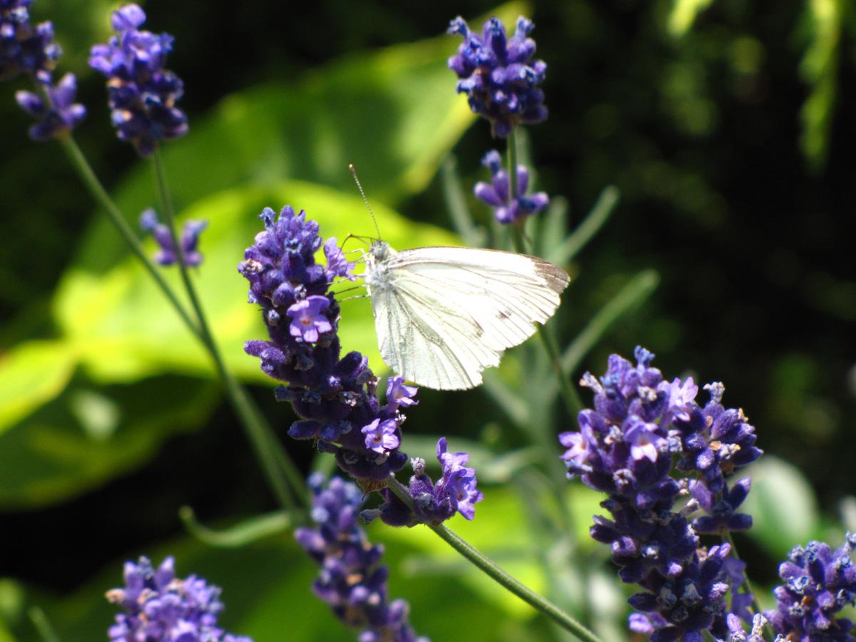 Motyle, fot. Sylwia Łojek